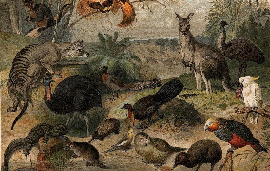Jakie jadowite lub na inny sposób groźne zwierzęta występują w Australii?