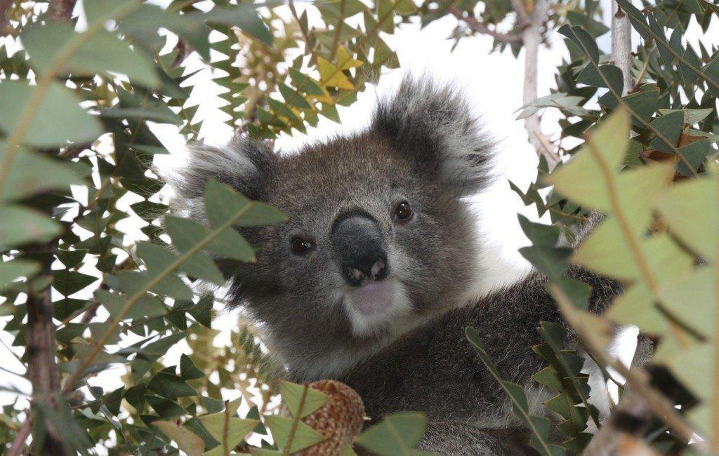 Niesamowite zwierzęta Australii